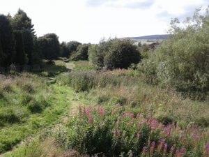 Auchnacraig Woods in Faifley (Clydebank)